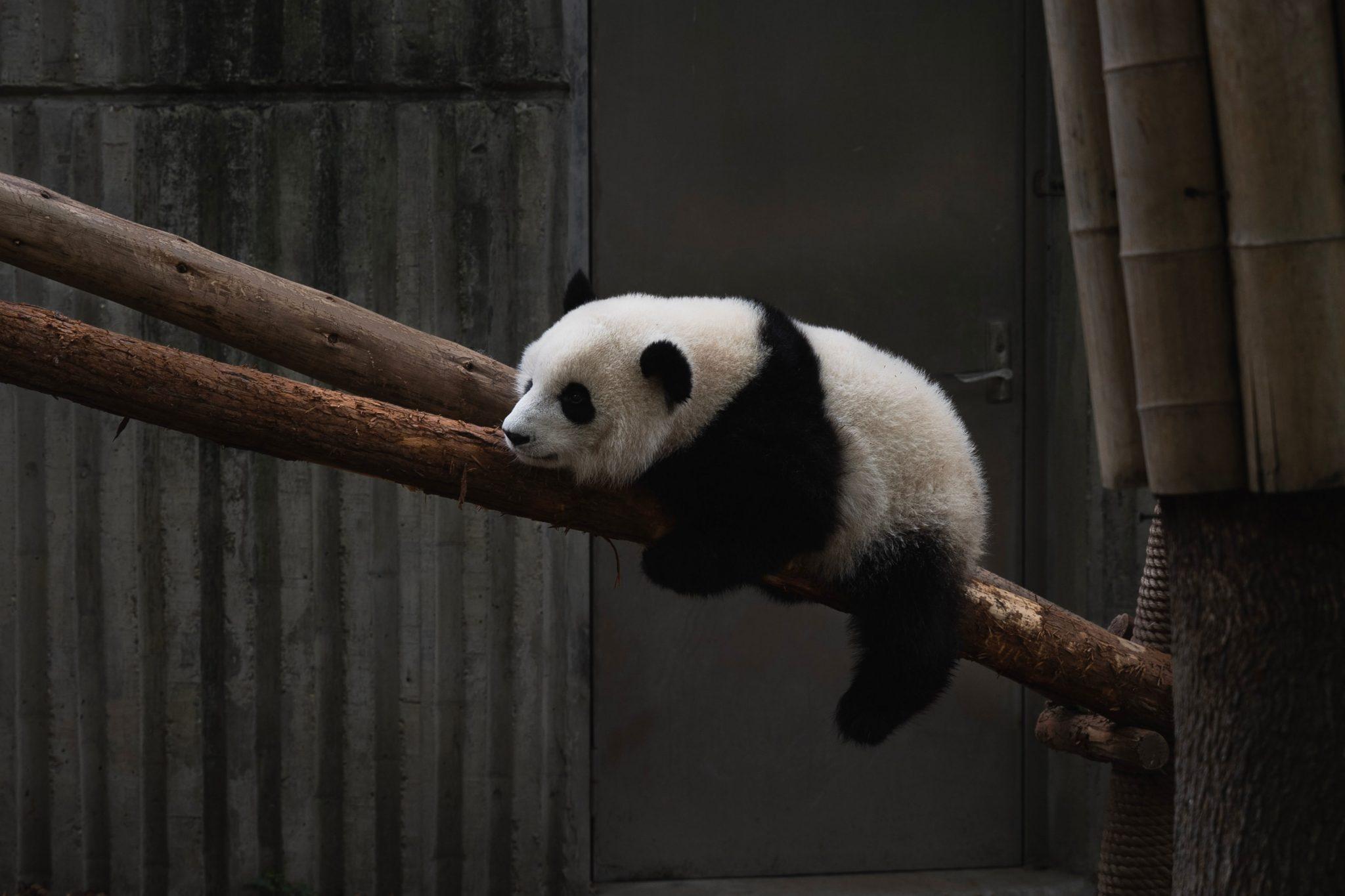 Panda 4.0: Quality Vs. Quantity